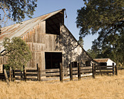 William Havle Art - McCourtney Barn  by William Havle