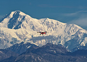 Denali Prints - McKinley Air Print by Ed Boudreau