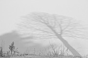 James BO  Insogna - Me and My Shadow Black and White