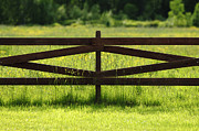 Danny Motshagen - Meadow Fence