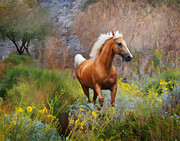 Melinda Hughes-Berland - Meadow Stallion