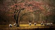 Hugo Bussen - Meadow with sheep
