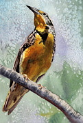Meadowlark Paintings - Meadowlark by Anne Gifford