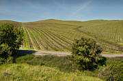 Kent Sorensen - Meandering Vineyard Road