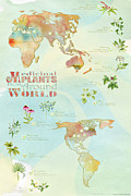 Cartography Mixed Media Prints - Medicinal Plants from Around the World Print by Tristan Berlund