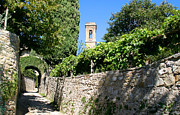 Chianti Vines Photo Prints - Medieval Streets Of Volpaia Chianti Tuscany Print by Mathew Lodge