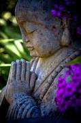 Meditation Photo Posters - Meditation Poster by Derek Selander