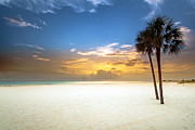 St Petersburg Florida Metal Prints - Meditation Metal Print by Edward Kreis