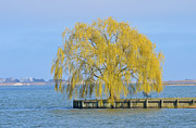 Willow Lake Metal Prints - Meditation Tree On Lake Metal Print by Adspice Studios