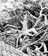 Medussa Prints - Medusa Tree Roots Print by Brian Sereda
