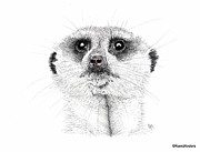 Meerkat Drawings - Meerkat by Hanneke Messelink-Anders