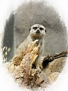 Meerkat Digital Art Posters - Meerkat Poster by Michelle Frizzell-Thompson