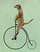 Animal Cards Framed Prints - Meerkat on a Black Penny Farthing Framed Print by Kelly McLaughlan