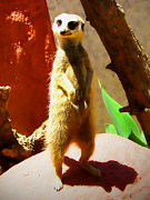 Meerkat Posters - Meerkat on watch Poster by Amber Nissen