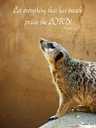 Meerkat Digital Art Posters - Meerkat Praise Poster by Methune Hively