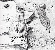 Meerkat Drawings - Meerkats by Inger Hutton