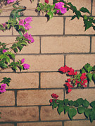 Brick Walls Prints - Meet in the Middle Print by Laurie Search