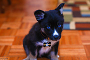 Puppy Photo Originals - Meet Jax by Elliot  Quintin