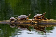Scott Holmes - Meet The Turtle Family