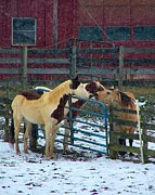 Barn Lots Framed Prints - Meeting of The Equine Minds Framed Print by Julie Dant