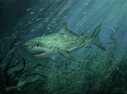 Sharks Painting Metal Prints - Megadolon Shark Metal Print by Tom Shropshire