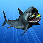 Megalodon Print by Corey Ford