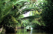 Overhanging Posters - Mekong Delta Backwater 01 Poster by Rick Piper Photography