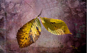 Yellow Leaves Prints - Melancholy Print by Betty LaRue