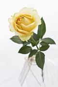 Kim Andelkovic - Mellow Yellow