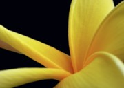 Sabrina L Ryan - Mellow Yellow