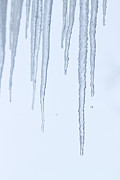 Winter Prints Photos - Melting Ice Icicles by James Bo Insogna