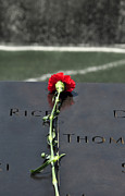 Featured Photo Originals - Memorial Rose by David Cabana