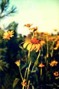 Coneflowers Photos - Memories of a Summer Day by Mary Machare