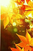 Anne-Elizabeth Whiteway - Memories of Bright Leaves of Autumn