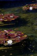 Memories Of Monet Print by Marilyn Wilson