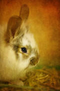 Rabbit Digital Art Metal Prints - Memories of Watership Down Metal Print by Lois Bryan