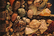 Sea Shell Art Prints - Memory of the Sea Print by Jenny Rainbow