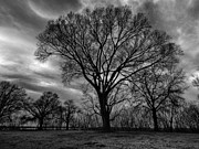 Bare Trees Metal Prints - Memphis Winter on the Mississipi 001 Metal Print by Lance Vaughn