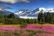 Mike Criss - Mendenhall Fireweed