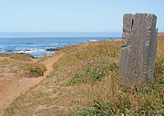 Donna Haggerty - Mendocino California at...