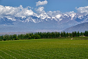 Mendoza Photos - Mendoza Vineyards and Andes by Kevin Bain