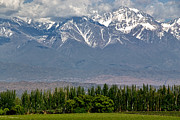 Malbec Metal Prints - Mendoza Vineyards and Andes No 2 Metal Print by Kevin Bain