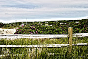 Wooden Fence Framed Prints - Menemsha Memories Framed Print by Michelle Wiarda