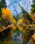 Terry Garvin Prints - Merced River and Leaning Pine Print by Terry Garvin