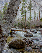 Terry Garvin Prints - Merced River from Happy Isles Print by Terry Garvin