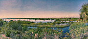 Nature Center Pond Prints - Merritt Island National Wildlife Refuge Panorama Print by Anne Rodkin