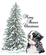 Berner Framed Prints - Merry Berner Christmas Framed Print by Liane Weyers