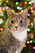 Happy Cat Posters - Merry Christmas and Happy Holidays Poster by Mandy Wiltse