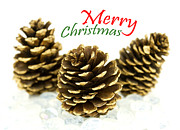 Pine Cone Photos - Merry Christmas by Blink Images