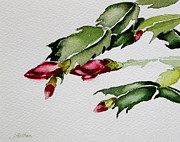 Julianne Felton Art - Merry Christmas Cactus 2013 by Julianne Felton